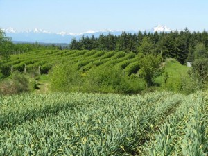 EduCulture teaches an appreciation for local food and farming. Bainbridge Island is blessed with rolling farmland with mountains on the horizon.