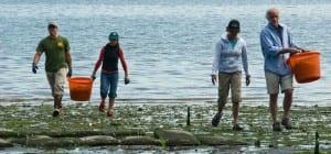Harvesting shellfish at Port Madison