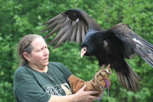 Lynne Weber, operations manager and wildlife rehabilitation specialist, with resident turkey vulture, Remington, one of the Wildlife Shelter's education ambassadors.