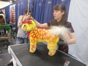 In this podcast, Julie describes a competition that turned this bichon into a red-mohawked dragon.
