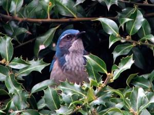 Avid Audubon birder Gene Bullock will reveal the best local bird spotting locations.
