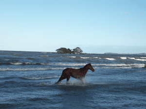 One photo in the exhibit shows a horse in Lake Nicaragua, which surrounds the island of Ometepe