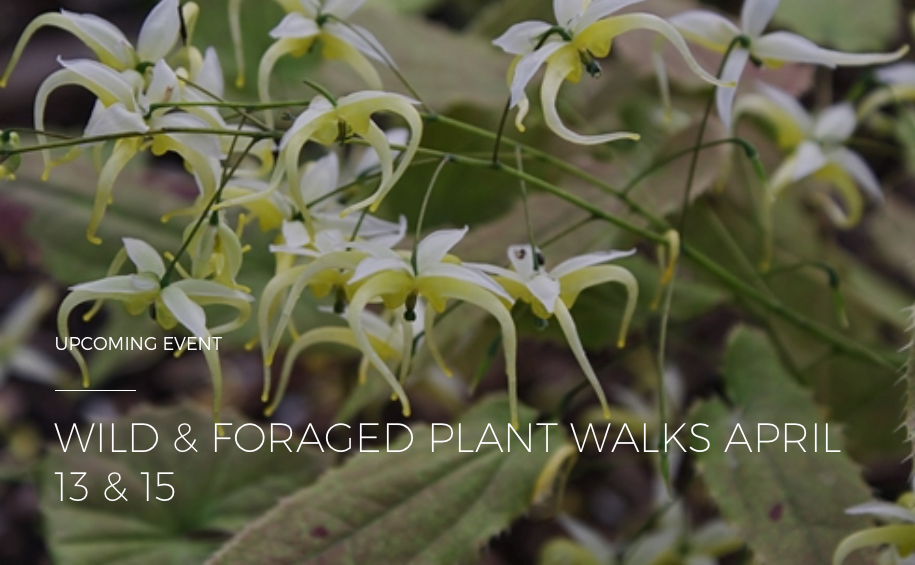 <i>Podcast: What's Up Bainbridge:</i> <br>Go foraging on a guided plant walk at Bloedel Reserve this month