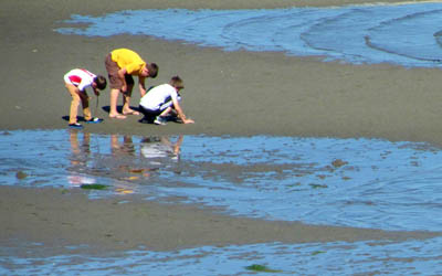 <b>Join the Bainbridge Beach Cleanup Sunday, September 9</b>
