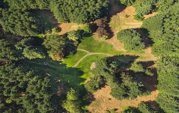 The Moritani Preserve ~ A Climate-Resilient Forest on Bainbridge Island